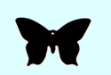 Picture of CB937 Swallowtail butterfly